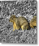 Squirrling Around Looking For Nuts Metal Print
