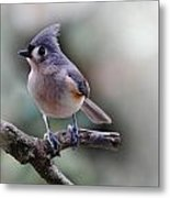 Sring Time Titmouse Metal Print by Skip Willits