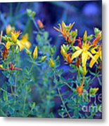 St John's Wort In The Forest Metal Print