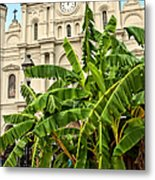 St. Louis Cathedral And Banana Trees New Orleans Metal Print