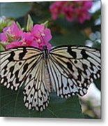 St. Louis Zoo Butterfly Metal Print