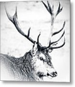 Stag In Black And White Metal Print