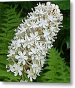 Stagger Grass Lily Metal Print