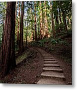Stairs Into The Woods Metal Print