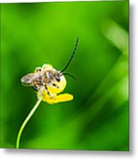 Staking A Claim - Featured 3 Metal Print