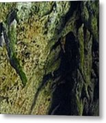 Stalactite Diversity At The Camuy Cave System Metal Print by Sandra Pena de Ortiz