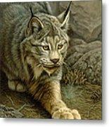 Stalking Lynx Metal Print