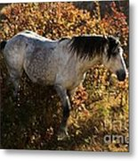 Stallion Of The Badlands Metal Print