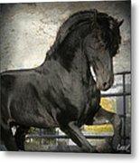 Stallion Power Metal Print by Royal Grove Fine Art