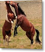 Stallion Way Metal Print