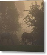 Stallions In The Fog Metal Print