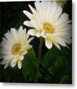 Stand By Me Gerber Daisy Metal Print