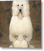 Standard Poodle Dog Metal Print