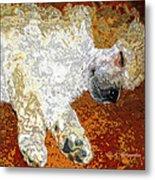 Standard Poodle Puppy Dozing Off Metal Print