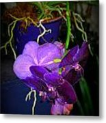 Standing Alone In Beauty Metal Print