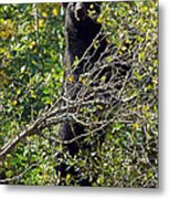 Standing Black Bear Metal Print