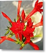 Standing Cypress Bouquet  Metal Print