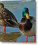 Standing Guard  Metal Print by Eric Rundle