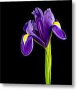 Standing Iris Metal Print