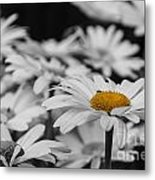 Standing Out From The Crowd 1 Metal Print