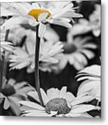 Standing Out From The Crowd 2 Metal Print