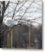 Standing Seagull Metal Print