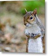 Standing Squirrel Metal Print
