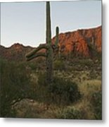 Standing Tall Metal Print by Andrea Vazquez-Davidson