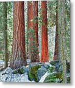 Standing Tall - Sequoia National Park Metal Print