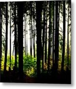 Stanley Park Triptych Right Metal Print