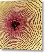 Stapelia Grandiflora - Close Up Metal Print