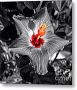 Star Bright Hibiscus Selective Coloring Digital Art Metal Print