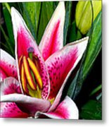 Star Gazer Lily Metal Print