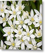 Star Of Bethlehem Metal Print