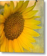 Star Of The Show Metal Print