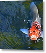 Stare Down With A Koi Metal Print