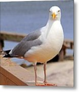 Stare Of A Seagull Metal Print