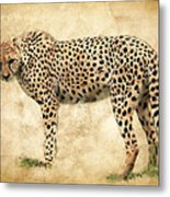 Stare Of The Cheetah Metal Print