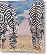 Stares And Stripes Metal Print