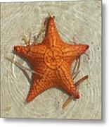 Starfish 1 Of Bottom Harbour Sound Metal Print