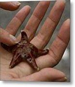Starfish 1 Metal Print