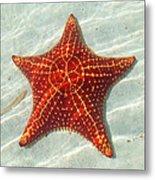 Starfish 3 Of Bottom Harbour Sound Metal Print