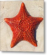 Starfish 4 Of Bottom Harbour Sound Metal Print