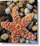 Starfish On Rocks Metal Print
