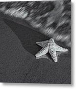 Starfish On The Beach Bw Metal Print