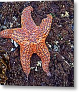 Starfish - Oregon Coastline Metal Print