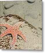 Starfish Underwater Metal Print