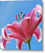 Stargazer Lily Series 3 Of 4 Metal Print