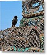 Starling On Lobster Pots Metal Print