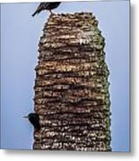 Starlings 2 Metal Print